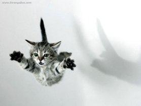 Όταν μια γάτα πέφτει πρέπει να υπακούει στους νόμους της Φυσικής