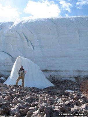 Η υποχώρηση των παγετώνων επιταχύνθηκε σημαντικά τα τελευταία χρόνια - αποκαλύπτοντας δείγματα δείγματα βρυόφυτων που είχαν παγώσει