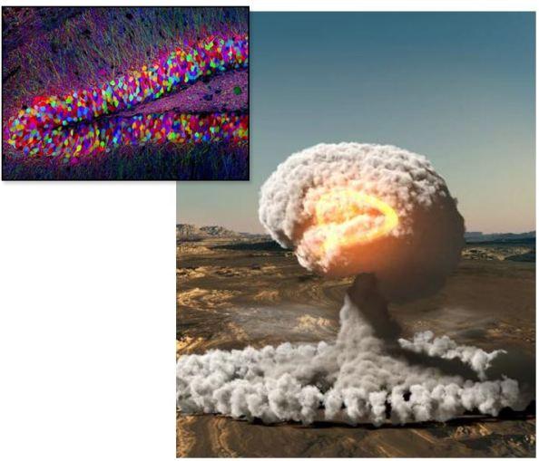 Οι πυρηνικές δοκιμές φωτίζουν το μυστήριο της γέννησης νέων νευρώνων