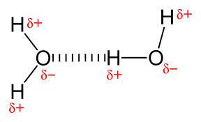 Δεσμός υδρογόνου (διακεκομμένη) μεταξύ δυο μορίων νερού