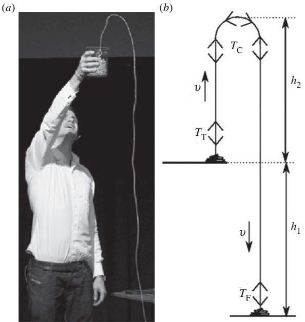 α) Ο Mould επιδεικνύει την αλυσίδα-σιντριβάνι. (β) Το απλούστερο μοντέλο για την ερμηνεία της αλυσίδας - σιντριβάνι. Μια αλυσίδα, με μάζα ανά μονάδα μήκους λ, βρίσκεται συσσωρευμένη σε ένα τραπέζι σε ύψος h1 από το έδαφος. Εκτινάσσεται με ταχύτητα υ προς τα πάνω, όπως φαίνεται στο σχήμα, όπου Ττ είναι η τάση πάνω από το τραπέζι, Τc η τάση στο μικρό καμπυλωμένο τμήμα στο μέγιστο της διαδρομής και ΤF η τάση ακριβώς πάνω από το έδαφος.