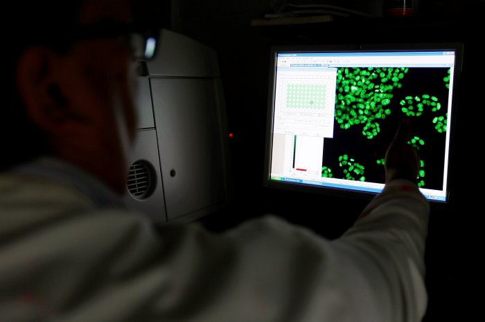 Scientist Clarke looks at a picture of labelled cells on a monitor at the Institute of Cancer Research in Sutton