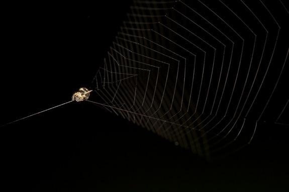 slingshot-spider1