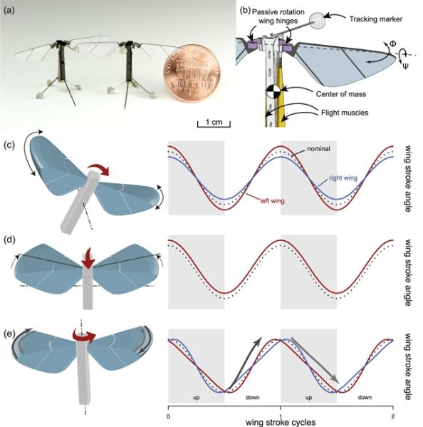 Ρομπότ σε μέγεθος νομίσματος ενός λεπτού με πτερύγια που μιμούνται τις κινήσεις φτερών εντόμων