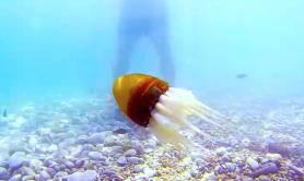 robot-octopus-1411564675191