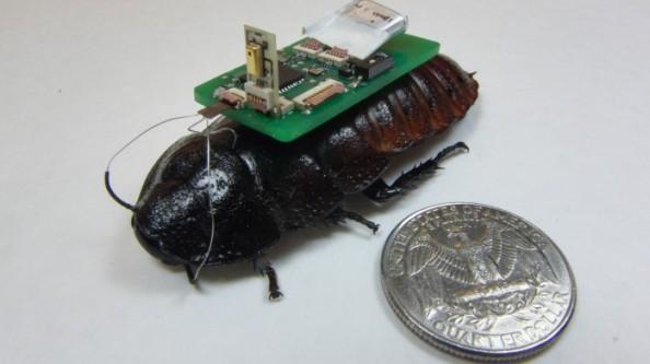 Bozkurt-Roach-HEADER-698x392