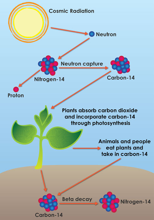 Πώς λειτουργεί η χρονολόγηση του άνθρακα