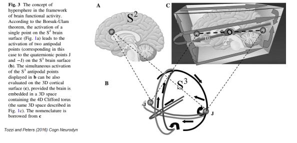 toros brain