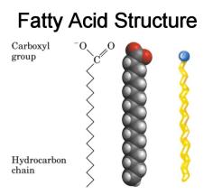 Το μόριο ενός λιπαρού οξέος