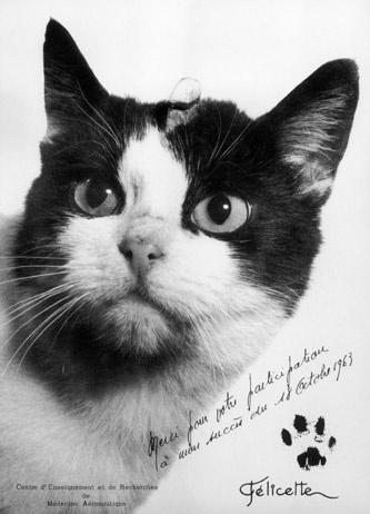 Η πρώτη γάτα που ταξίδεψε στο διάστημα και επέστρεψε στη Γη, ήταν Φελισέτ, μια γενναία αδέσποτη γάτα